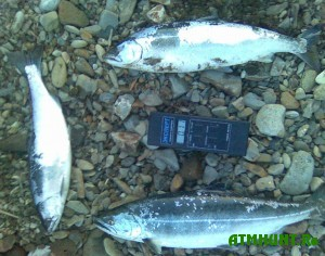 v-yaponii-vylavlivayut-radioaktivnuyu-rybu
