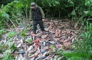 Mariupol'skie brakon'ery za nepolnyj mesjac vylovili 6 tonn ryby