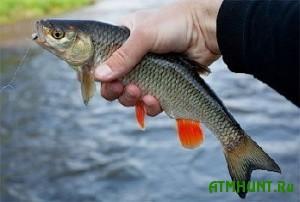 Na luganskom rybolovnom sorevnovanii za rybu schitali tol'ko golavlja
