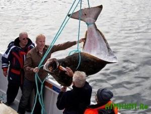 Nemcu ne dali protashhit' 200-kilogrammovuju rybinu na samolet