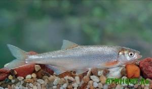 Za majskie prazdniki brakon'ery vylovili 2700 kilogramm ryby