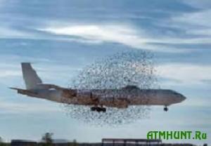 Zhitelej Amsterdama otstrel gusej vozmushhaet bol'she, chem aviakatastrofy