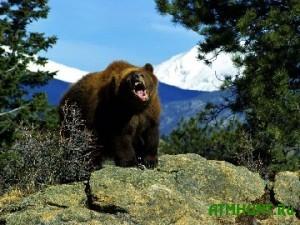 Amerikanskij ohotnik vyzhil posle vstrechi s golodnymi medvedjami