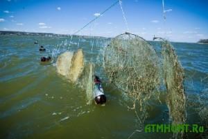 Iskusstvennye nerestilishha pomogli uvelichit' rybnye zapasy Ukrainy