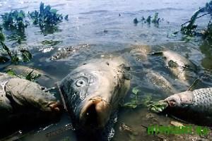 Jeksperty utverzhdajut, chto zamorennaja ryba iz Ukrainy absoljutno zdorova