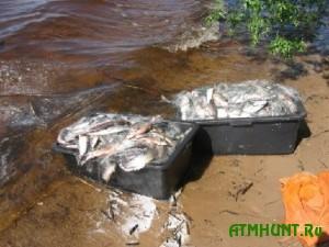 Ukrainskie inspektora zaderzhali brakon'erov s 89 rybinami