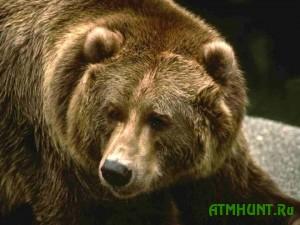 134320577650Medvedicu, pjat' let sluzhivshuju mishen'ju dlja natravlivanija sobak, prodali v zoopark