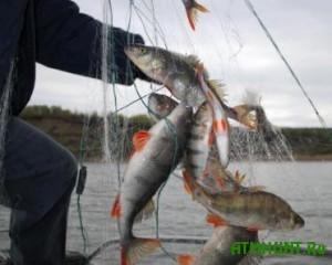Na Dneprodzerzhinskom vodohranilishhe rybaki nezakonno nalovili ryby na 300 tys. grn.