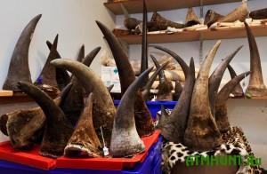 V Chehii zaderzhana mezhdunarodnaja banda, u kotoroj iz#jali roga nosoroga na 100 mln. kron