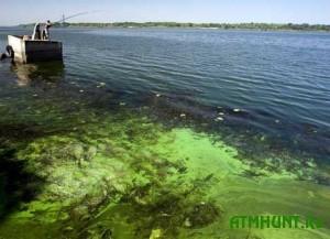 V Dnepre vozle Kieva voda kishmja kishit bakterijami
