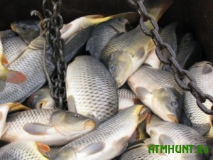 V central'noj Ukraine v jetom godu slovleno v dva raza men'she ryby