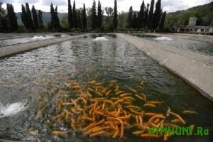 Iz-za stremlenija ljudej razvodit' vse bol'she ryby v Kitae zatopilo poberezh'e