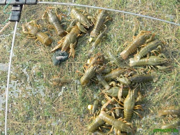 S 15 avgusta v Zaporozhskoj oblasti zapretjat lovlju rakov