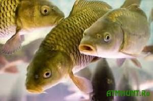 Ukrainskaja rechnaja ryba stanovitsja vse bolee opasnoj dlja zdorov'ja