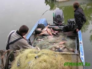 Ukrainskie rybnye brakon'ery razorili stranu na 129 tys. griven