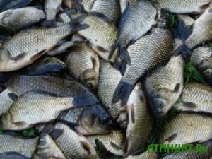 Zhitel' Ukrainy zaplatit bol'shoj shtraf za dobychu 242 rybin