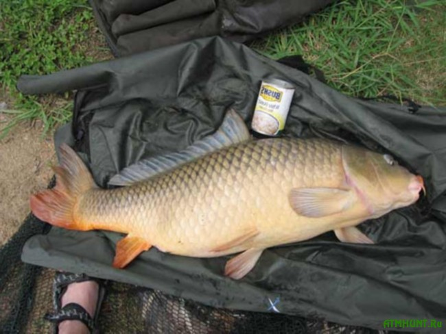способы рыбалки на сазана