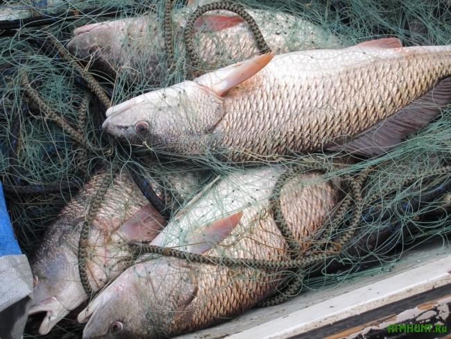 Полицейские задержали «рыбных» браконьеров