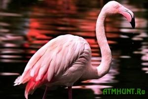 V Berdjanske opasajutsja, chto brakon'ery zastreljat zabludivshegosja flamingo