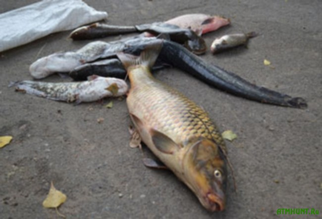 V Zaporozh'e usilivajutsja sovmestnye rejdy na vodoema