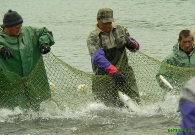 vylov ryby setjami