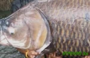56-letnij rybak pojmal na svoj Den' rozhdenija gigantskogo karpa