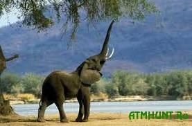 Blagotvoriteli pomogajut spasat' slonov ot zhestokih brakon'erov