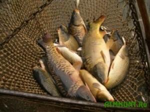 Brakon'er ograbil rybnye zapasy Ukrainy pochti na 5 tysjach griven