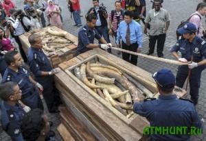 Malazijskie brakon'ery dobyli 2 t slonov'ih bivnej