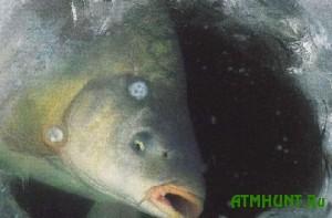 S pervogo nojabrja ljubiteljam rybalki pridetsja vremenno zabyt' o svoem hobbi