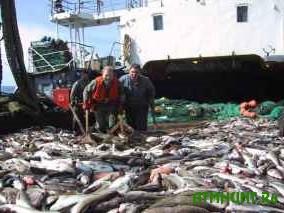 Ukrainskij rybokombinat nelegal'no vylovil 6 tonn ryby
