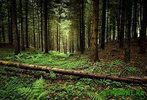 Vmesto dikih zhivotnyh ohotniki obnaruzhili v lesu umirajushhego muzhchinu