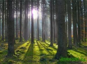 V Ukraine zhena ubitogo egerja budet soderzhat' pjateryh detej na 1200 griven