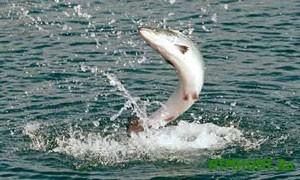 ryba v more