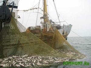 vylov ryby