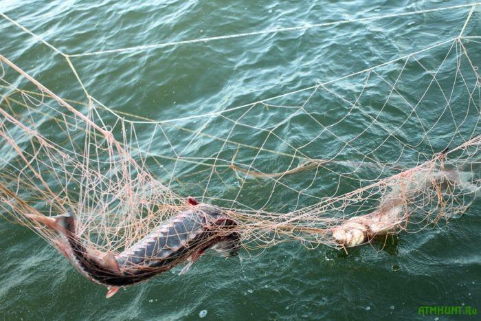 Brakon'ery pojmali 406 kg ryby v Azovskom more