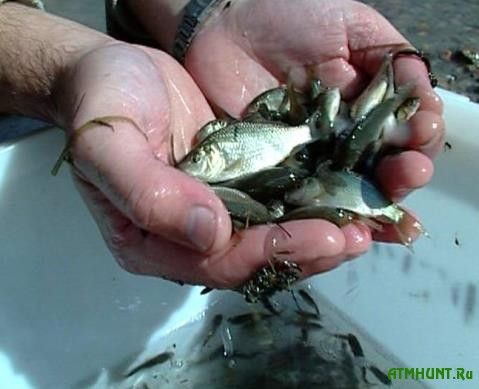 Chernigovskie brakon'ery nalovili molodnjaka ryby na 780 tysjach griven