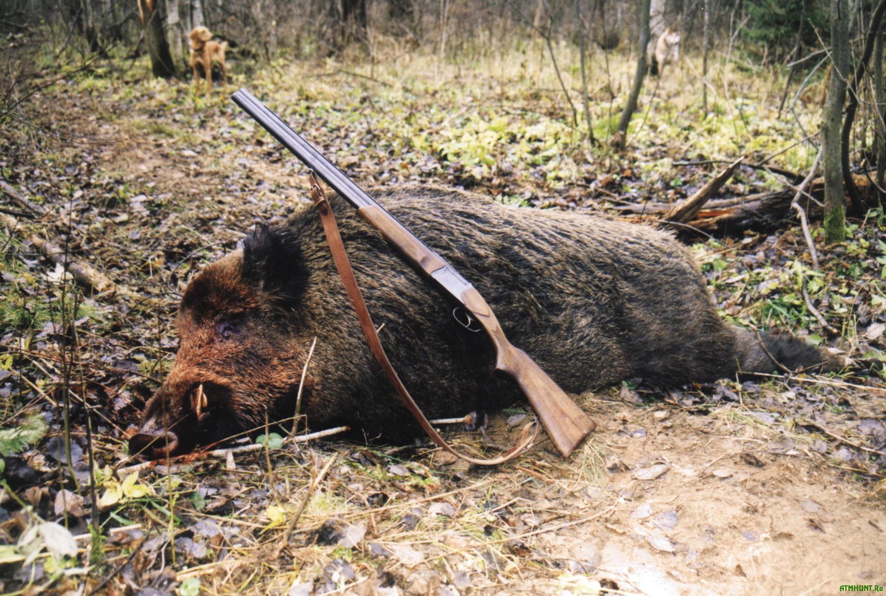 Radi ohoty na kabana brakon'ery iz Ukrainy chut' ne ubili belorusskih pogranichnikov