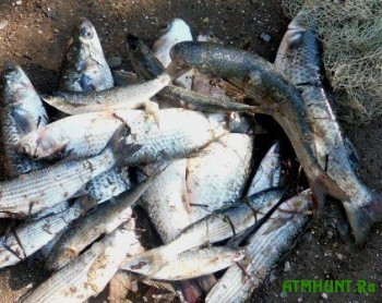 V Krymu rybak-ljubitel' nalovil kefali i pilengasa na 55 tys. griven
