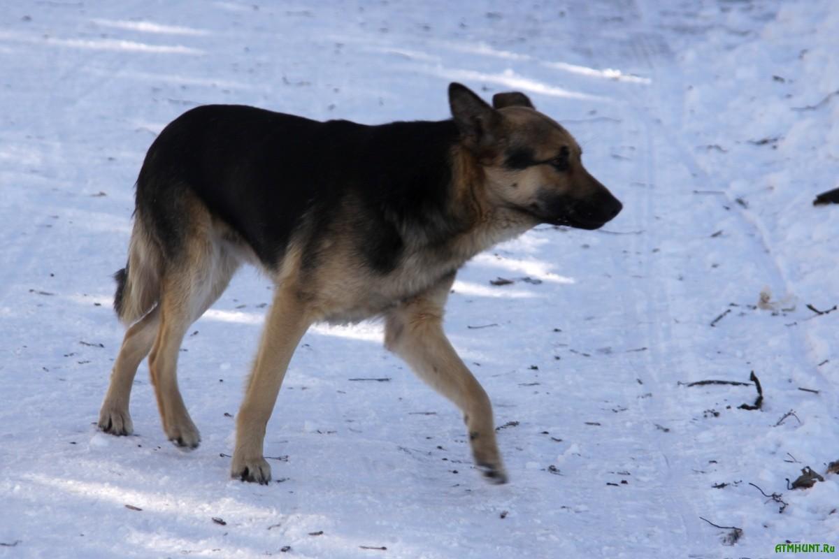 Бездомная собака и снег