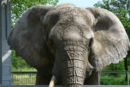 Kievskij zoopark zhdet ser'eznaja vstrjaska posle poseshhenija Golubchenko