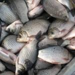 За один день в Крыму задержали двоих рыбных браконьеров