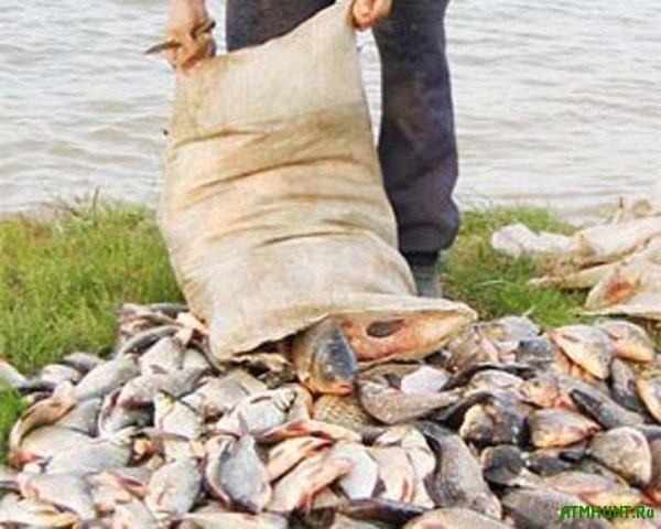 Hersonskie brakon'ery vylovili 1,2 tonny ryby