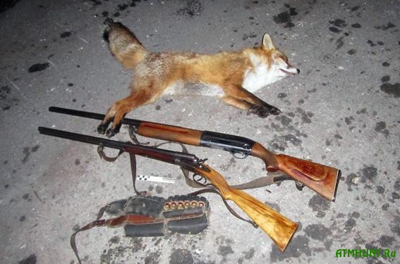 На Хмельниччине браконьер устроил охоту на лисиц прямо в нацпарке