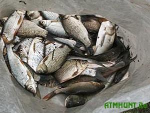 V Donbasskih vodoemah ryba gibnet ot nehvatki kisloroda