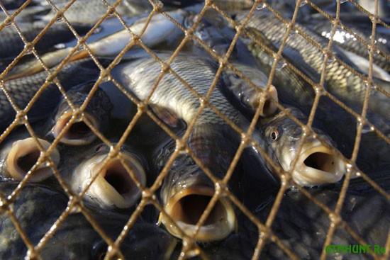Doneckie brakon'ery nalovili 40 kg ryby samodel'nymi setjami