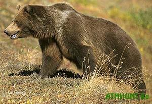 Na L'vovshhine dva brata pytalis' izbit' medvedja