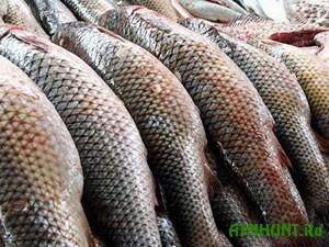 V Zaporozhskoj oblasti zaderzhali mikroavtobus s 2 tonnami ryby