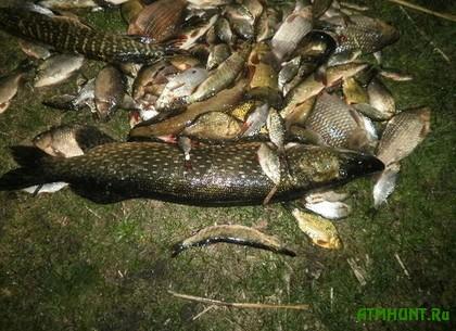 Har'kovskie brakon'ery naglushili ryby na 13 tysjach griven