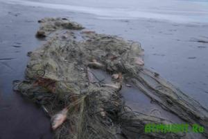Na Odesshhine zaderzhali brakon'era so 120 kilogrammami karasej
